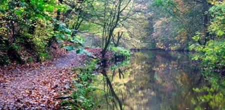 5 Woodland Trust Sites To Explore