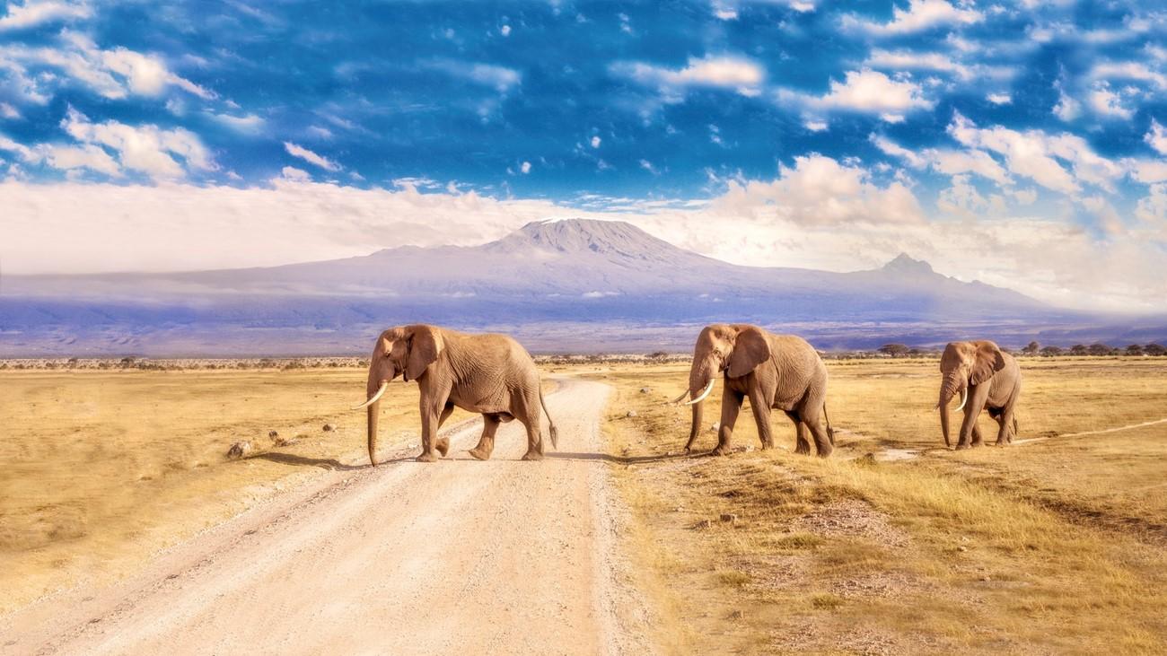 Kruger National Park, Southern Africa