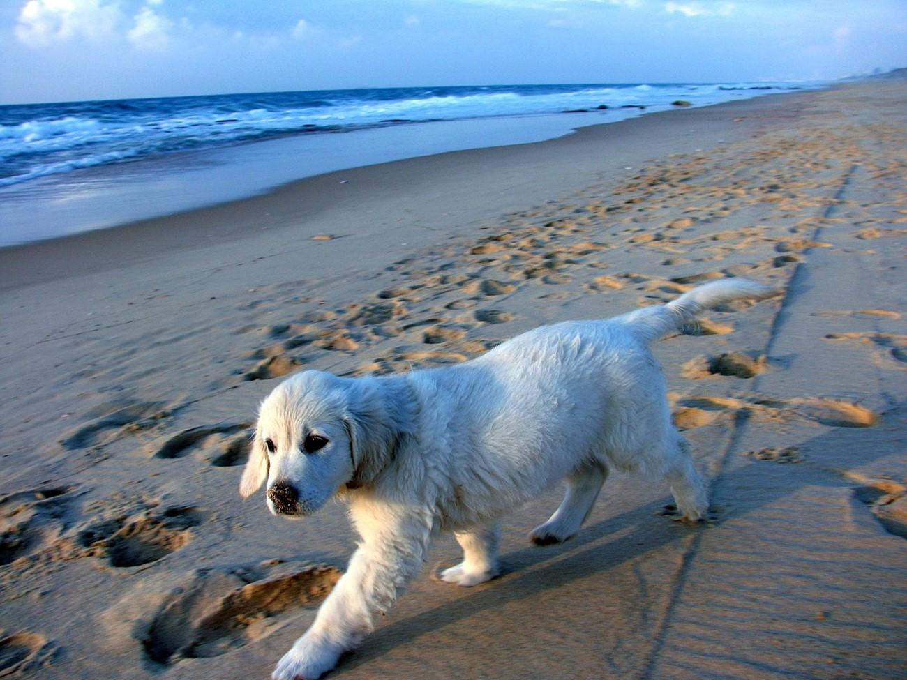puppy-739827_1280.jpg